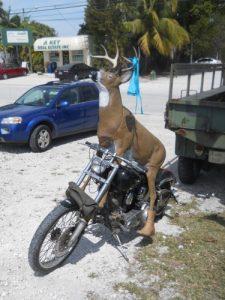deer-rider